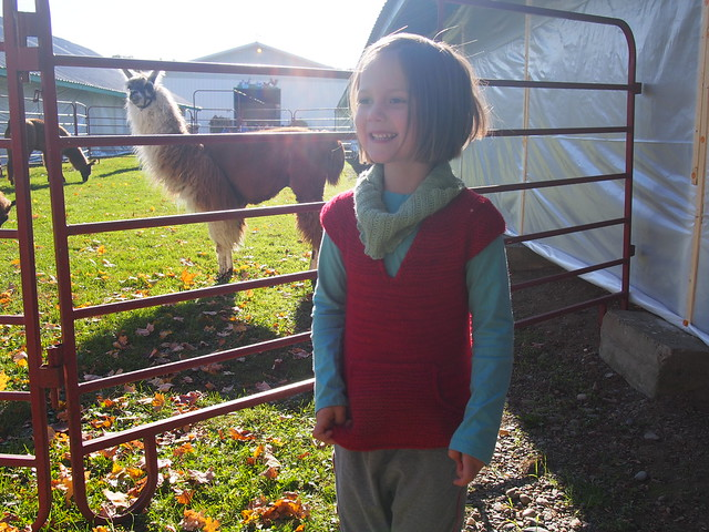 Maddy and the llamas