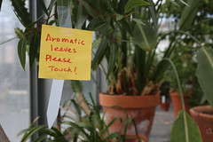 The biology department's greenhouse tour offered a diverse selection of plants during Family Weekend.