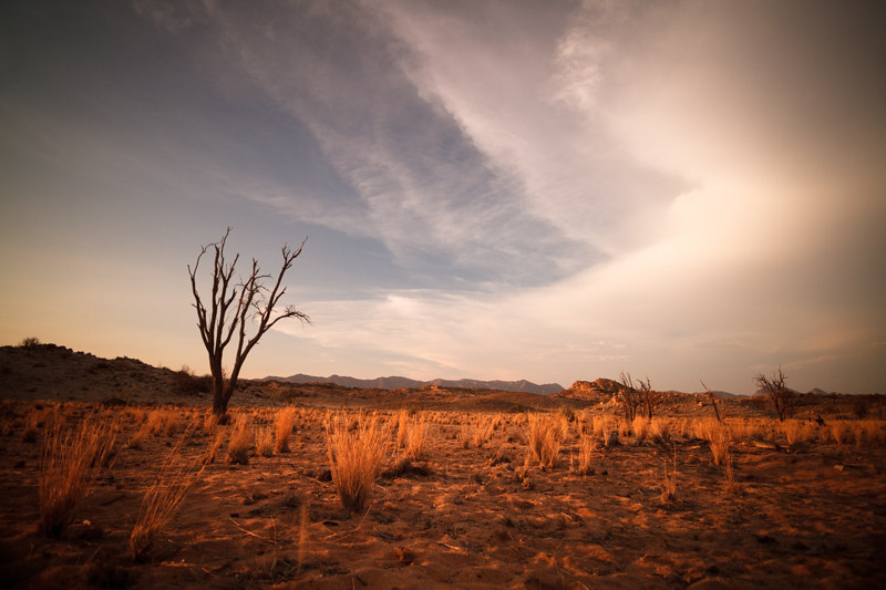 Steppe-Farm-Namibia-Dead-trees