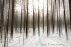 The Faded Woods (HSS)