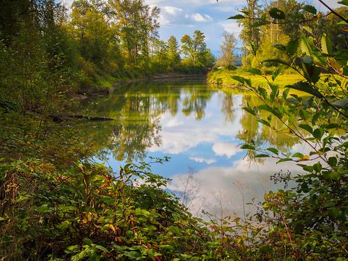 pond water river kanakacreek mapleridge foliage fall autumn landscape