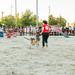 Miranos a los OJOS 1er Canicross Solidario_20171008_Rafael Muñoz_097