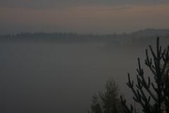 Shades of misty morning