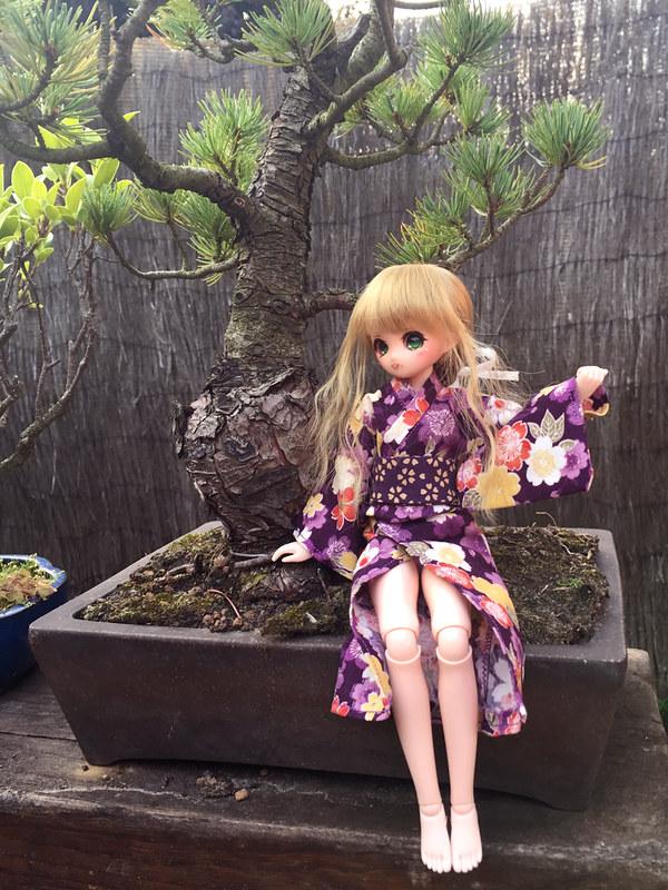 [Obitsu 24-Petite Hime] Ma Petite Hina <3 37862202101_386507e08e_c
