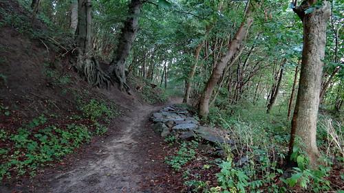 Auf Rügen wandelt schweigend und düfteschwer vom Berg der ewigen Glut sternenbekränzt im losen Gewande die Nacht einher 02301