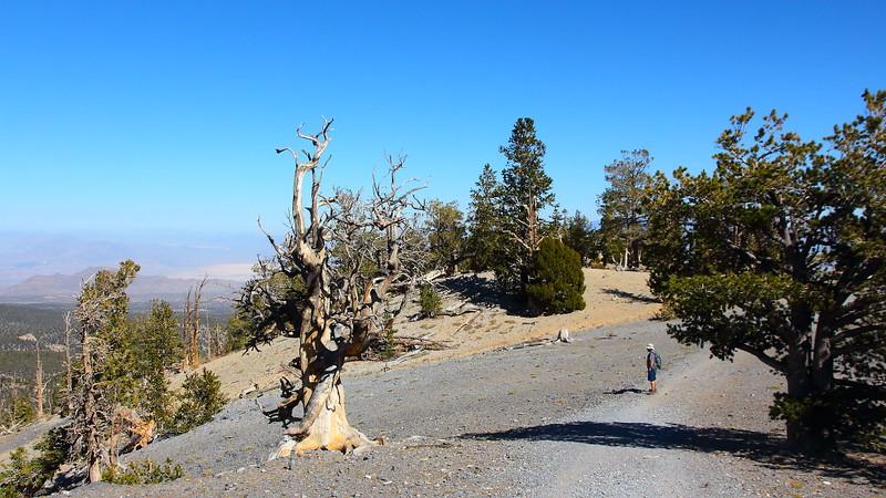 IMG_8218 North Loop Trail