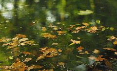 autumn floats slowly by