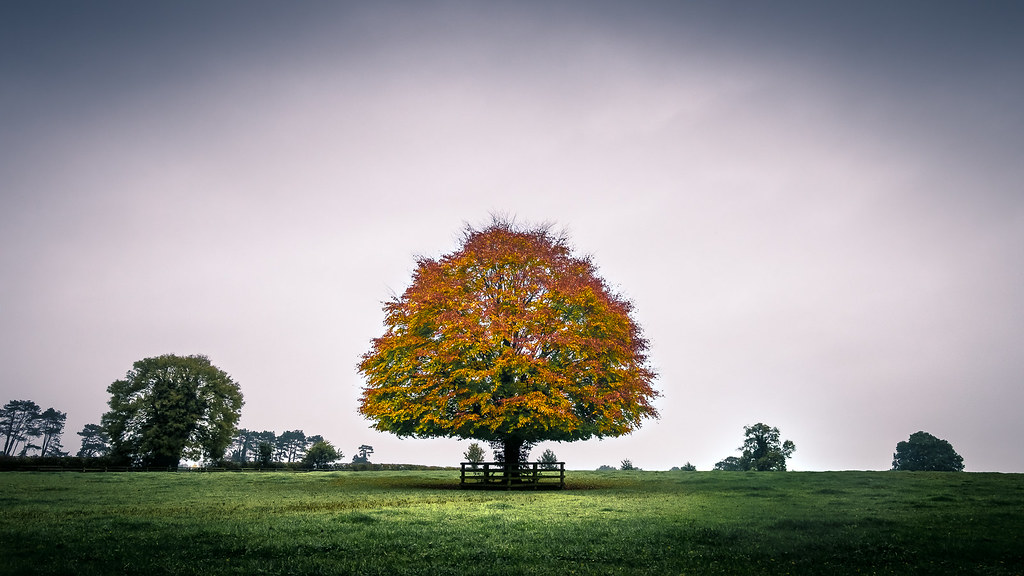 The tree - Kildare, Ireland - Landscape photography