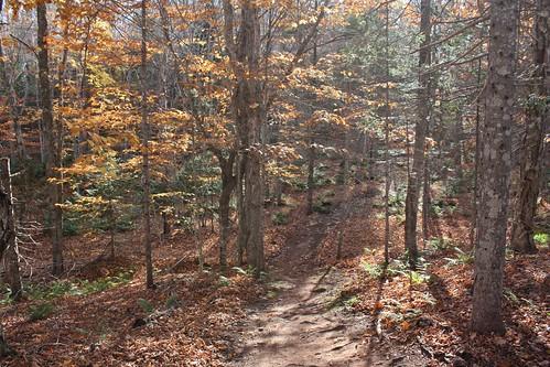 bonshaw pei strathgartney canada woods forest trail trees fall autumn foliage sunlight