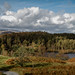 Tarn Hows and the Langdale Pikes