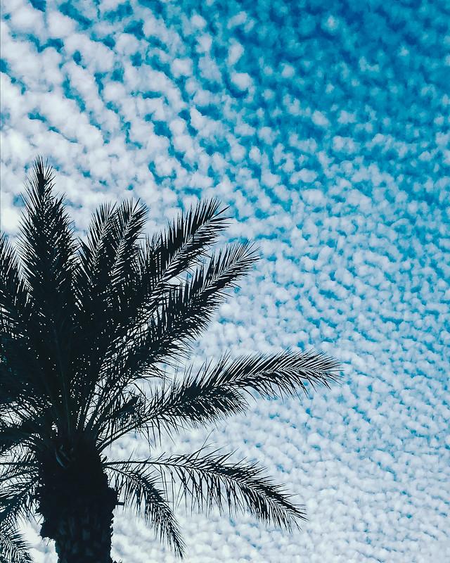 Palms & Puffs