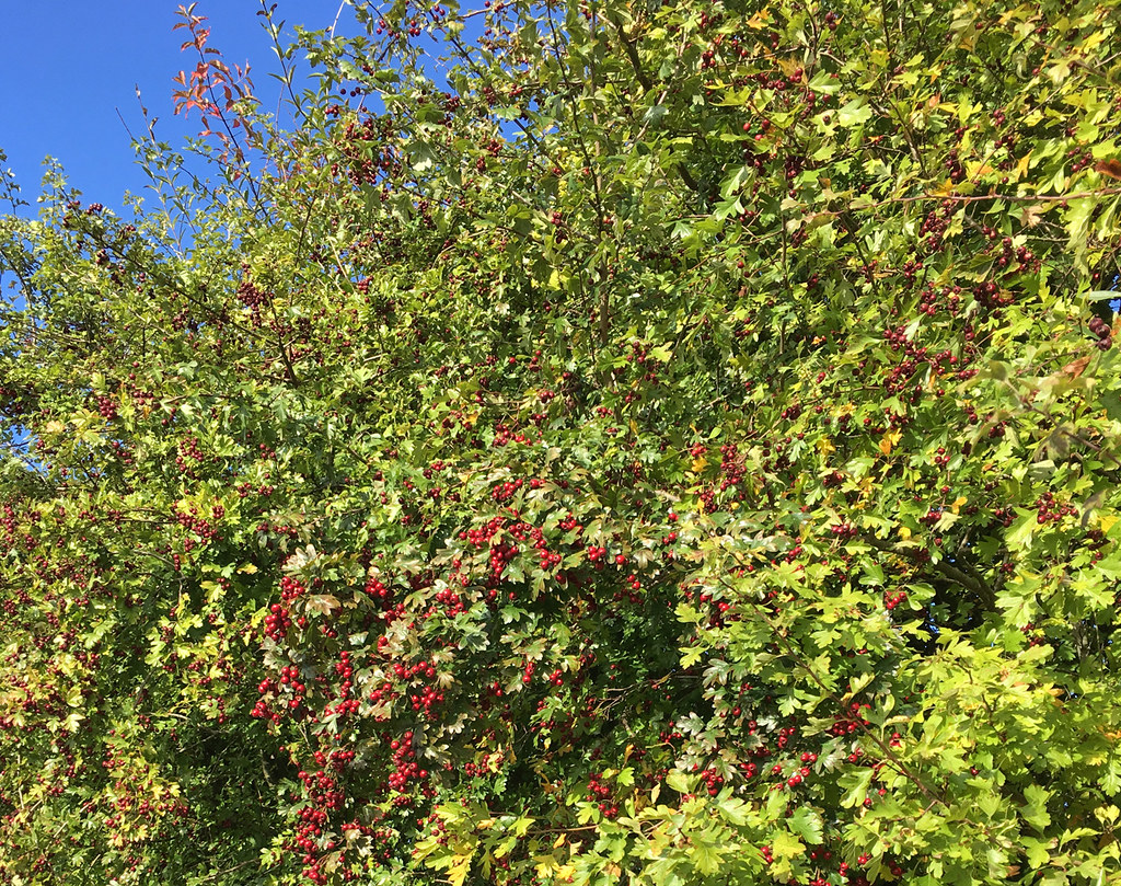 2017-10-08 10.12.38 Woldingham Circular