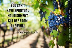 Stay Connected to The True Vine! _ I am the vine; you are the branches. Whoever abides in me and I in him, he it is that bears much fruit, for apart from me you can do nothing. John 15:5 ESV
