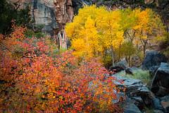 No ThoroughFALL Canyon (10-16-17)