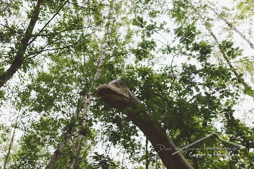 Dino im Baum