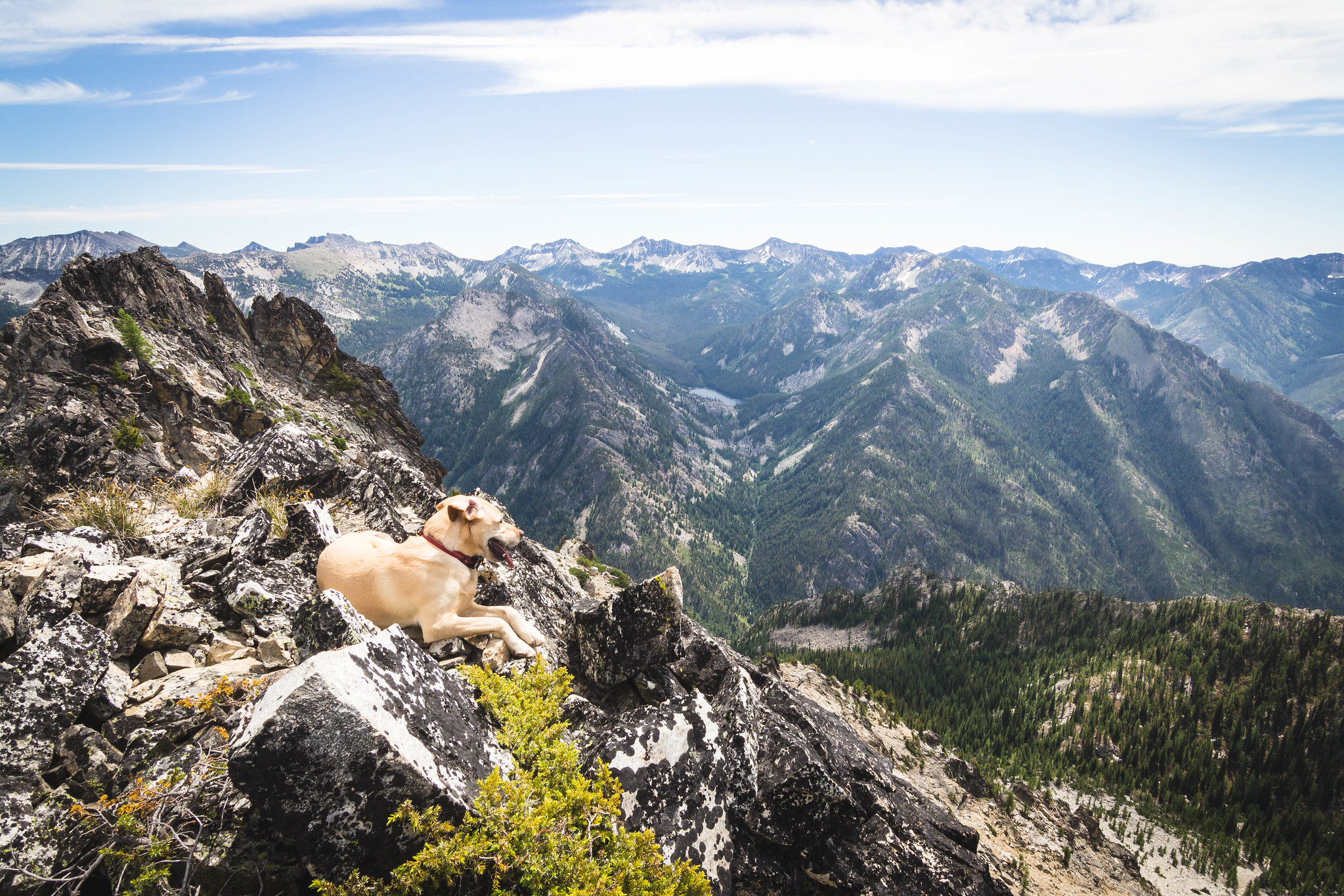 Summit dogs on Finney Peak