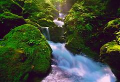 A mountain stream of sunlight