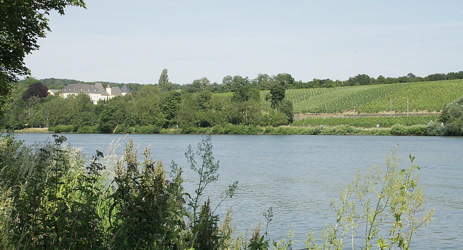 Wijn proeven in Luxemburg, wijnroute | Mooistestedentrips.nl
