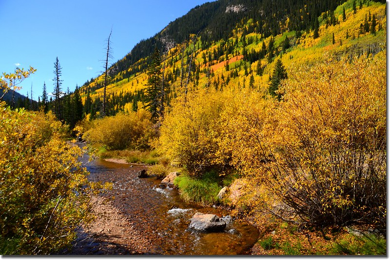 Fall colors, Guanella Pass, Colorado (6)