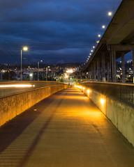 blue night, yellow path