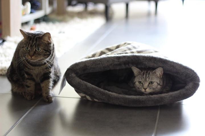 Mijn katten door mijn nieuwe lens