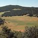 Small photo of Kermes oak/Juniper wood and fields Imouzzer