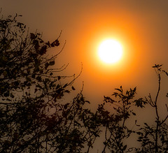 Red sun framed by twigs.