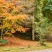 Autumn Colours (Aberfeldy)