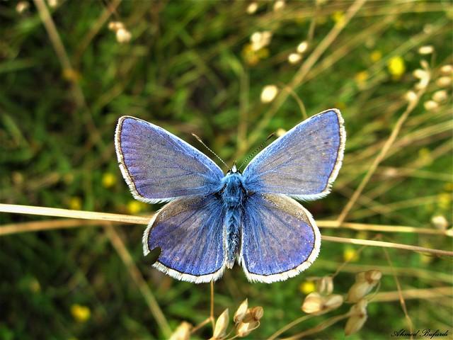 Butterfly 1472