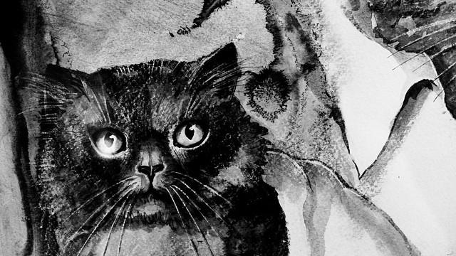 Kattenkabinet_10_2017-5