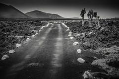Lonely road, Lanzarote
