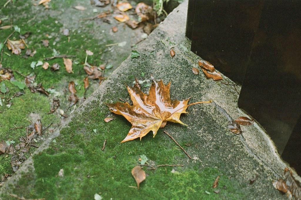 leaves me - Kraków