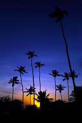 Jericoacoara: Paradise on earth !