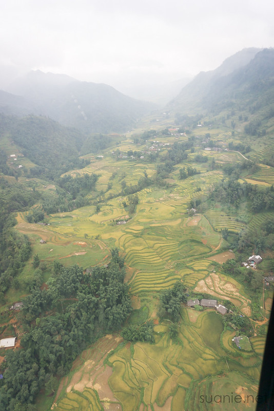 Sapa, Fansipan - view of rice terrace fields