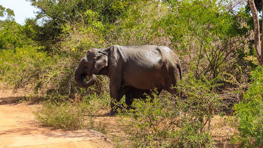 25.06-Yala-National-Park-Sri-Lanka-canon-1500px-053