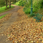 Autumn leaves at Avenham Park Preston