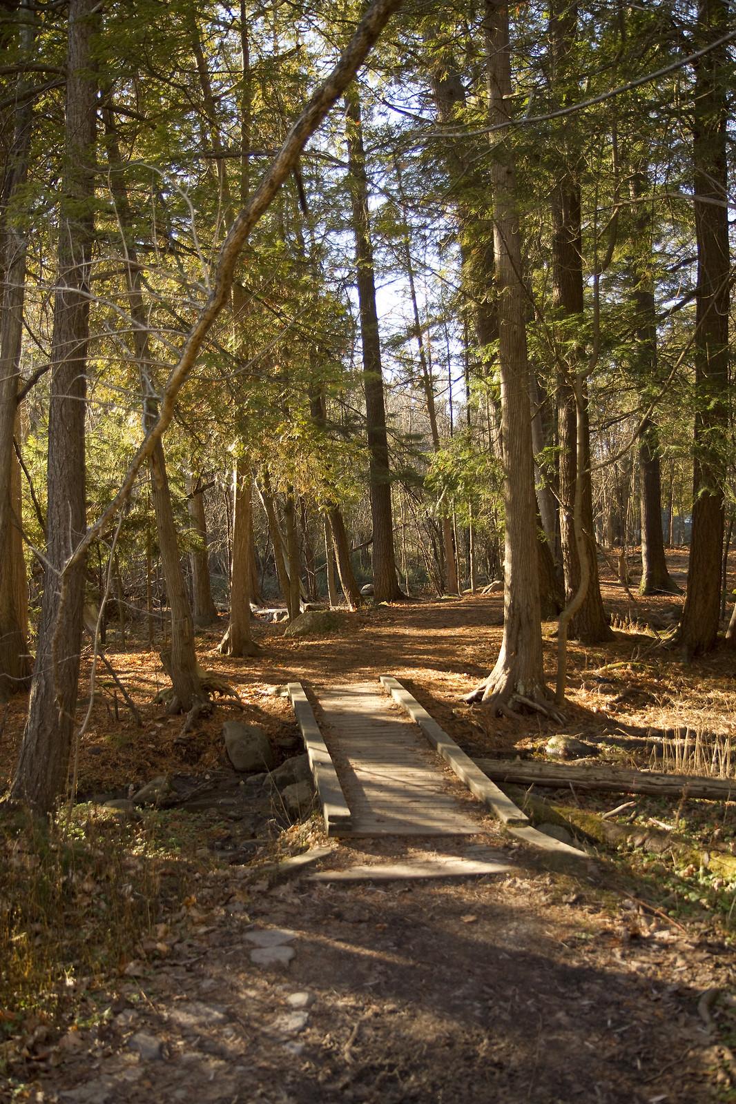 into the trees Jackson creek