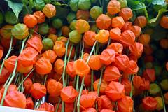 DSC_7545 London Columbia Road Sunday Flower Market Orange Chinese Lanterns