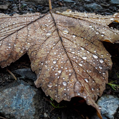 Herbst (Symbolbild)
