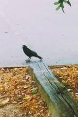 #bird #species #imnotsurewhatimdoing
