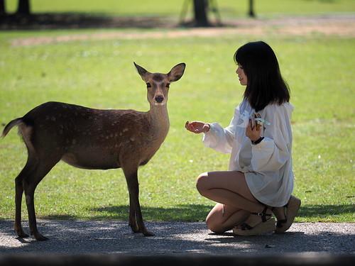 World heritage Nara deer