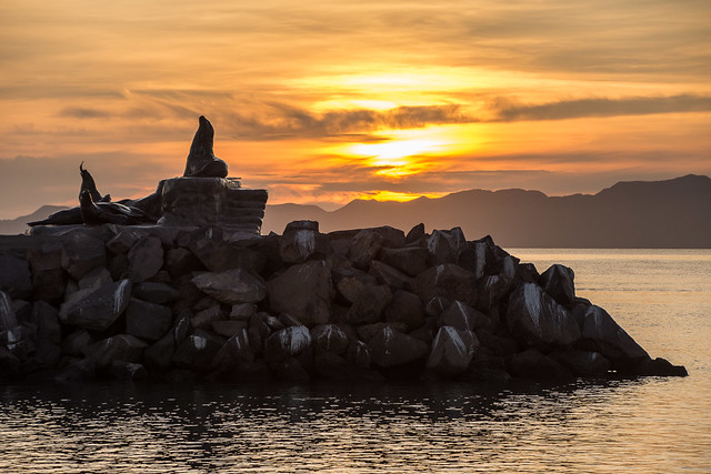 sunrise and sea lion statue