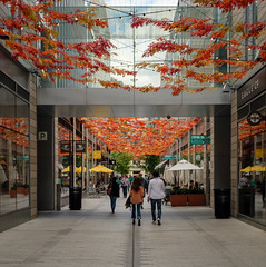 Autumn at City Center