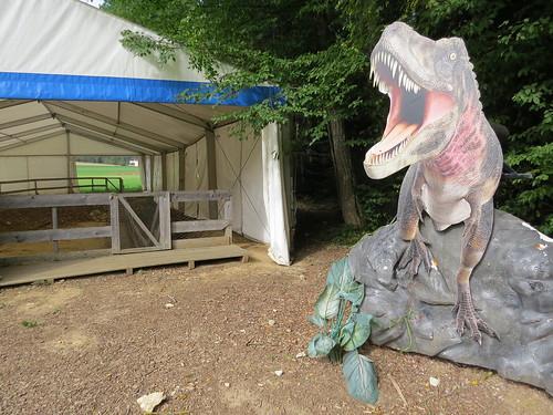 152 millions years old dinosaur (sauropod) footprints track