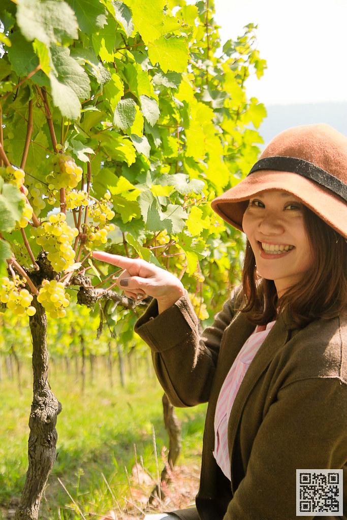 萊茵河 雷斯玲白葡萄此區約佔80%