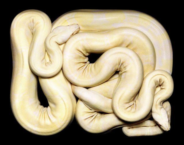 snake_art_16