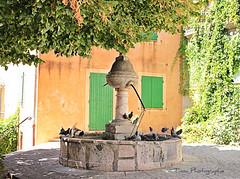 En période de canicule, bain public pour pigeon - Photo of Tavernes