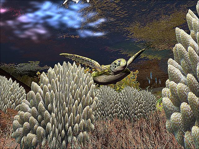 Libentia - Sea Turtle