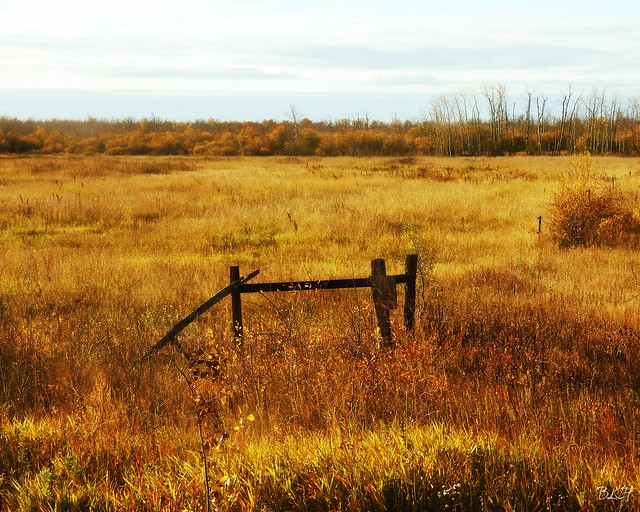 Manitoba Countryside in the Fall