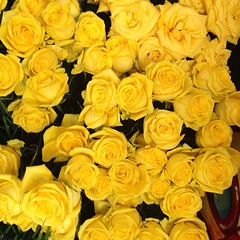 The undeniable aroma of hundreds of thousands of Tyler roses is in the air! Visit Tyler Texas this weekend, Oct. 19-22, for the 84th Annual Texas Rose Festival! Travel Tip- Tyler is 1.5 hours from Dallas and Shreveport, and 3.5 miles from Houston.
